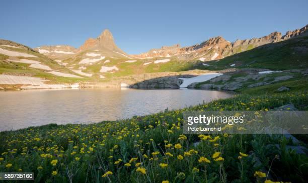 sharp mountain, wild flowers. colorado - カリフォルニアバイケイソウ ストックフォトと画像