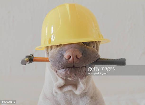 Funny Hard Hats Stock Photos And Pictures Getty Images