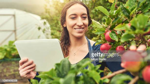 she has apps to assist her through the harvesting process - apple harvest stock pictures, royalty-free photos & images