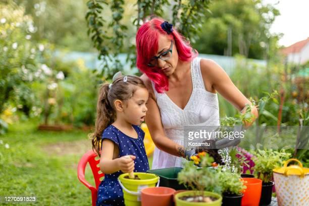 ella está realmente asombrada con cómo funciona la cosa cuando se planta hierba de menta - mint plant family fotografías e imágenes de stock