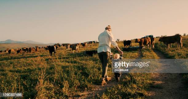 she just wants to chase after the animals - female animal stock pictures, royalty-free photos & images