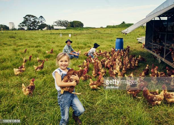 she loves caring for the chickens - australia stock pictures, royalty-free photos & images