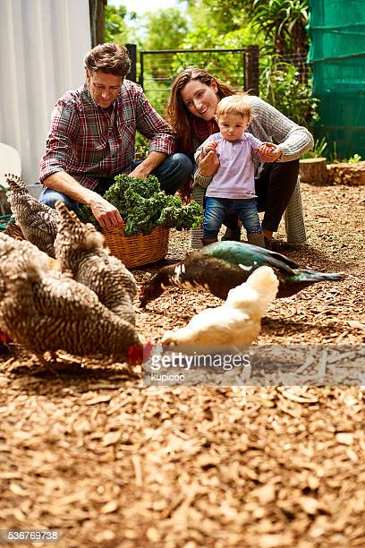 she loves it on the farm - monogamous animal behavior stock photos and pictures
