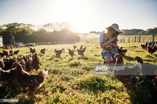 she loves work on the farm - poultry stock photos and pictures