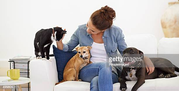 she simply loves animals! - dog and cat stock photos and pictures