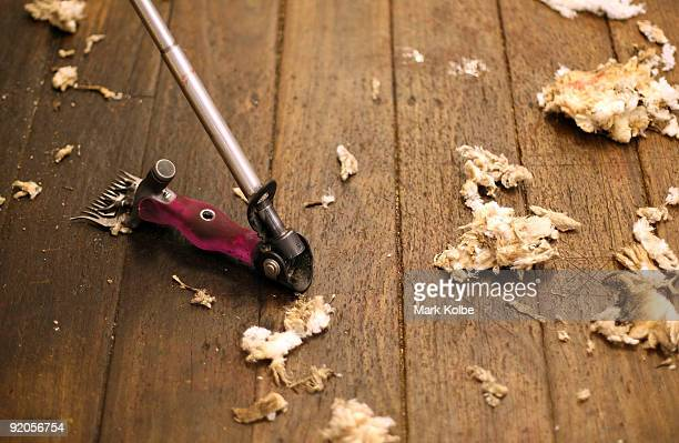 A shear lies on the shed floor during spring shearing at Cherry Hill Pastoral Company property on October 19 2009 in Uralla Australia Shearing in...