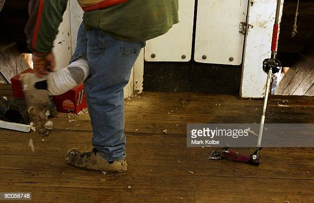 Shearer puts on his moccasins on at the start of a day of spring shearing at Cherry Hill Pastoral Company property on October 19, 2009 in Uralla,...