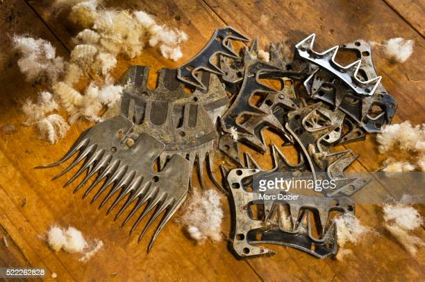 Shearing tools for the sheep