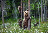 She-bear and cubs.