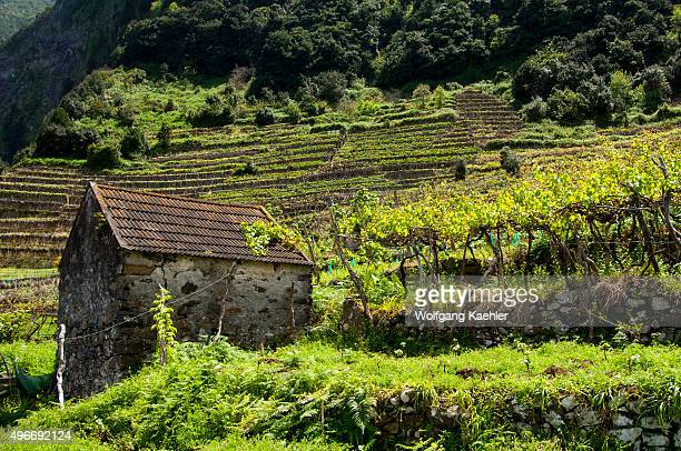 A shed in a vineyard on the north coast of the Portuguese island of Madeira near Seixal