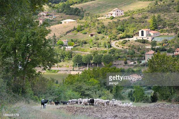 sheep and dogs above french village - aveyron stock pictures, royalty-free photos & images