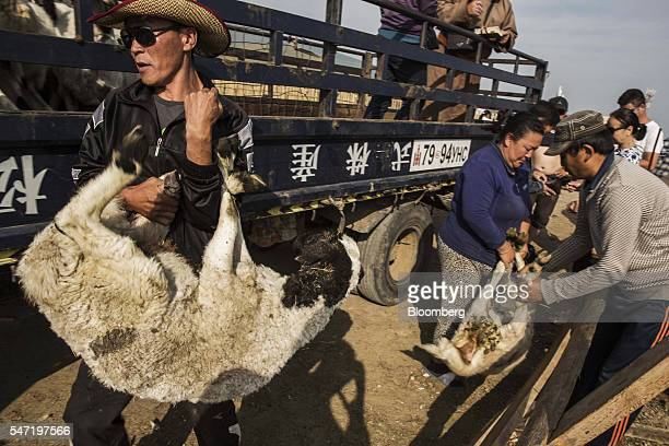 Sheep and goats are carried from a truck to be slaughtered at a livestock market on the outskirts of Ulaanbaatar Mongolia on Wednesday July 13 2016...
