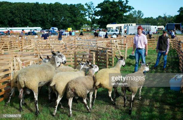 Sheep are guided into their pens during 152nd the Ryedale Country Show on July 31 2018 in Kirbymoorside England Held in Welburn Park near...