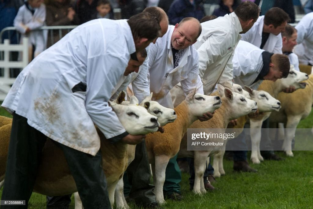 Sheep are judged in a show ring on the first day of the Great Yorkshire Show near Harrogate in northern England on July 11, 2017. The agricultural show, which was first held in 1838, showcases all aspects of country life. Organised by the Yorkshire Agricultural Society (YAS), it is held each July and attracts around 130,000 visitors over the three days. / AFP PHOTO / Oli SCARFF