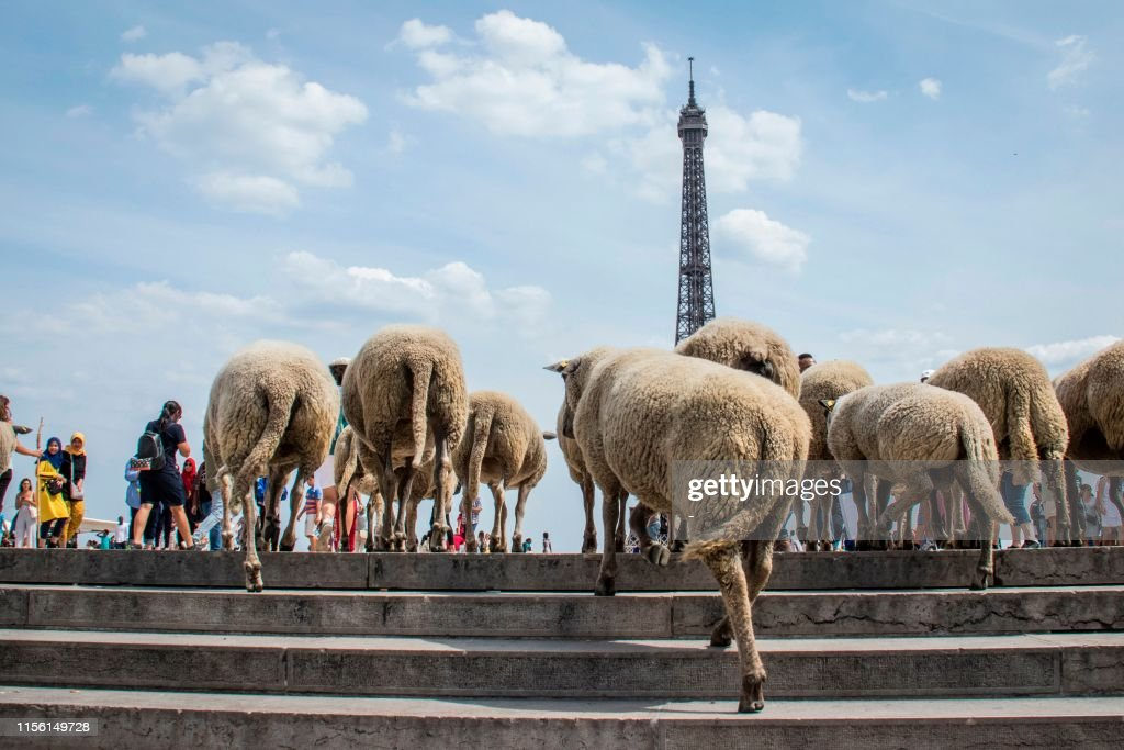 TOPSHOT-FRANCE-FARMING-AGRICULTURE-CITY-SHEEP : News Photo