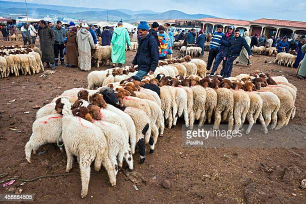 sheep at moroccan market africa - moroccan culture stock photos and pictures