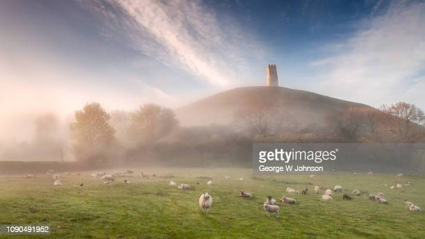 sheep at the tor - glastonbury stock pictures, royalty-free photos & images