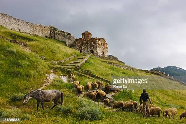 Sheep below Holy Trinity Church in Berat Castle