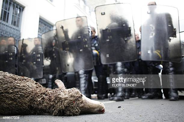 A sheep carcass lies on the street after being thrown by French sheep farmers as riot policemen block the access to the Agriculture Ministry in Paris...