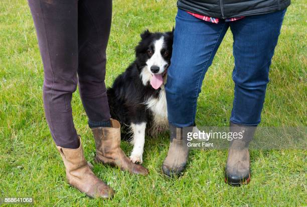 sheep dog standing at feet of two women sheep farmers. - human leg stock pictures, royalty-free photos & images