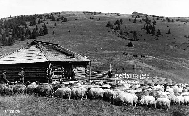 Sheep farming Bistrita Valley Moldavia northeast Romania c1920c1945 Depicting customs and traditional labour in the rural Carpathian Mountains in the...