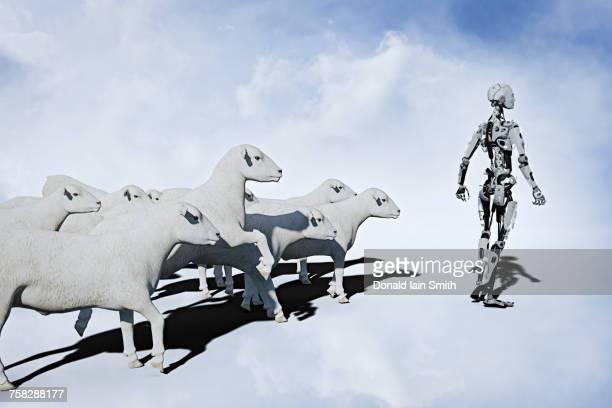Sheep following robot