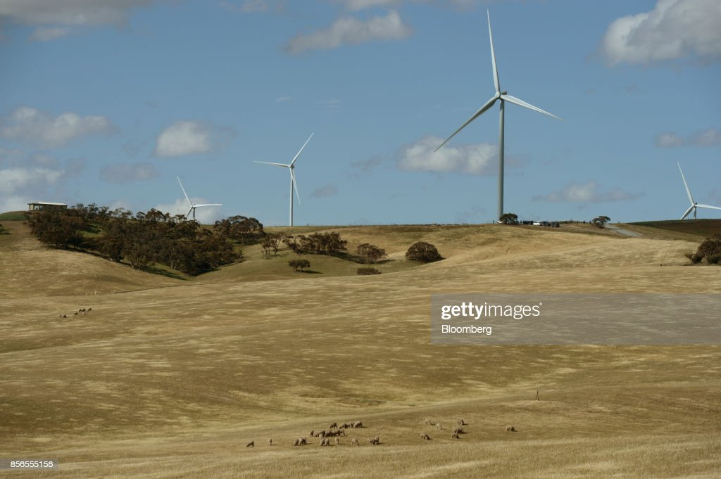 Sheep graze as wind turbines stand at the Hornsdale wind farm, operated by Neoen SAS, near Jamestown, South Australia, on Friday, Sept. 29, 2017. About half the capacity of the worlds largest lithium-ion battery project is installed at Hornsdale wind farm in South Australia, Tesla chief executive officer Elon Musksaid at an event on Sept. 29. When this is done in just a few months, it will be the largest battery installation by a factor of three in the world, Musk said. Photographer: Carla Gottgens/Bloomberg via Getty Images