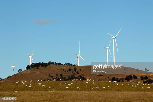 Sheep graze as wind turbines stand at the Woodlawn Wind Farm operated by Infigen Energy in Bungendore New South Wales Australia on Friday July 31...