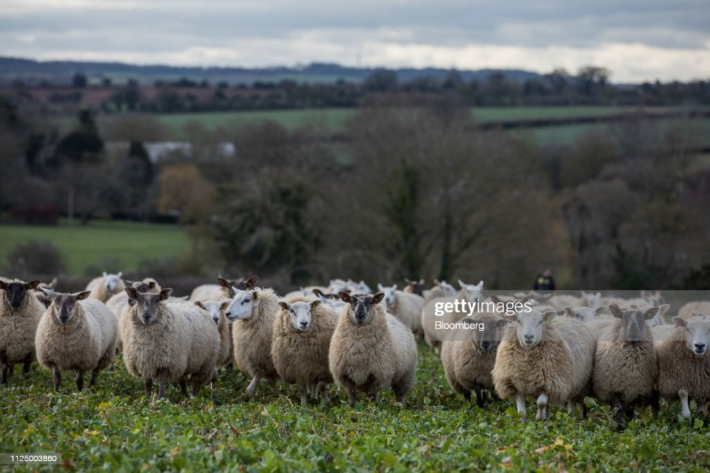 GBR: Why Lamb Chops Could Be on the Menu in a No-Deal Brexit