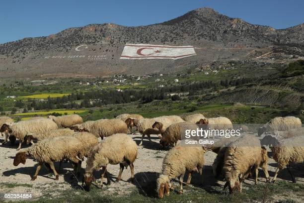 Sheep graze in the Turkish Republic of North Cyprus near a massive TRNC flag that adorns a nearby mountainside on March 6, 2017 in Taskent, Cyprus....