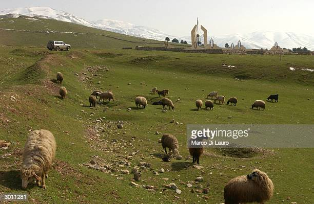 Sheep graze near the site of a mass grave where most of the victims of the March 16, 1988 chemical attacks are buried February 24, 2004 in Halabja,...