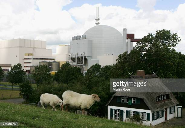 Sheep graze on a meadow in front of the Brokdorf nuclear power station on June 30 2007 in Brokdorf near Hamburg Germany The Brokdorf nuclear power...