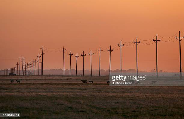 Sheep graze on dry grass on February 25, 2014 in Los Banos, California. As the California drought continues and farmers struggle to water their...