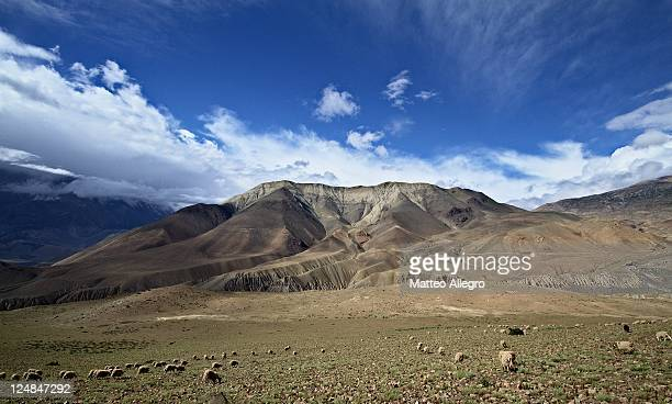 Sheep grazing against mountains