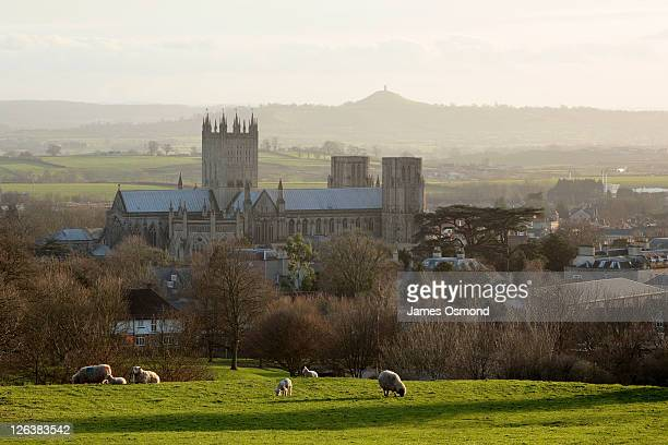 Sheep grazing in a field in front of Wells Cathedral, with Glastonbury Tor in the distance