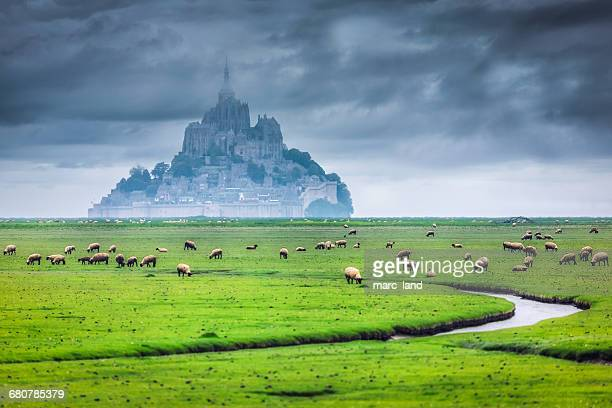 sheep grazing in front of mont saint michel, normandy, france - ノルマンディー ストックフォトと画像