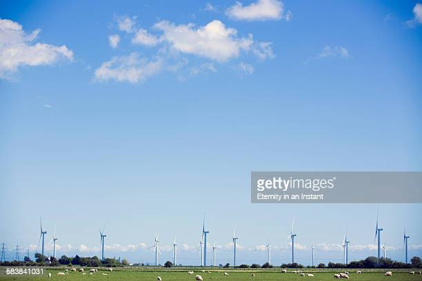 sheep grazing in front of wind turbines - domestic animals stock pictures, royalty-free photos & images