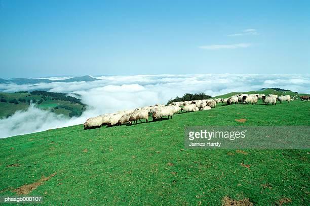 sheep grazing in mountains - pais vasco fotografías e imágenes de stock