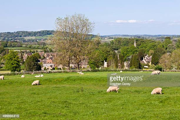 Sheep grazing, Lower Slaughter
