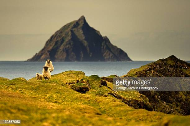 Sheep grazing on grassy hillside