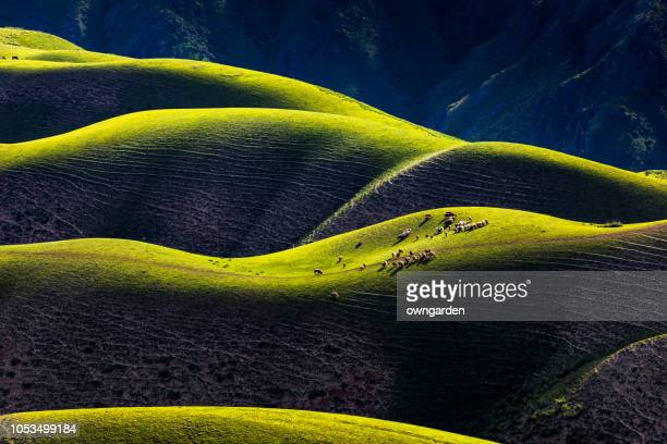 sheep grazing on the karajun grassland,xinjiang,china - xinjiang province stock photos and pictures