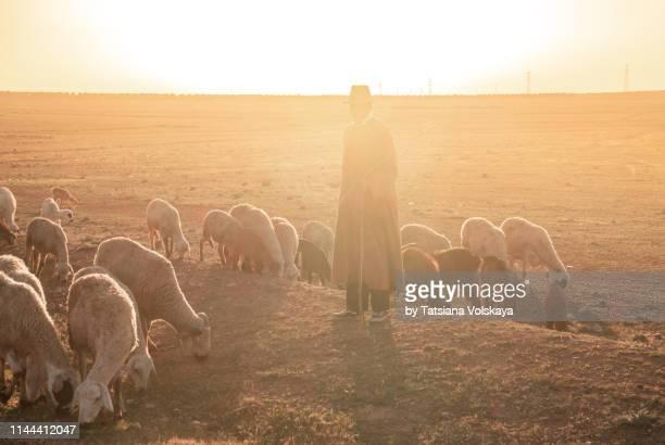 sheep herd with shepherd in traditional clothing, morocco, africa - pastora vega fotografías e imágenes de stock