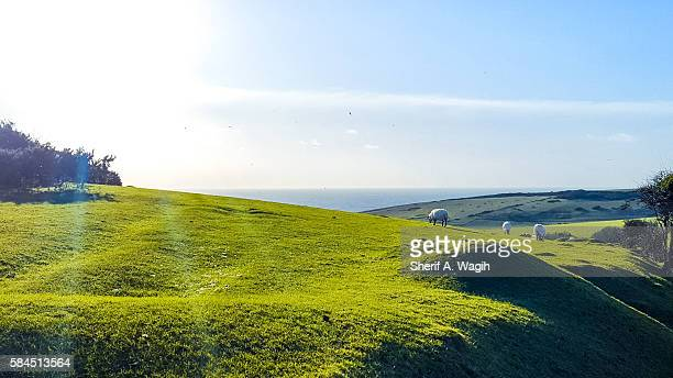 Sheep, Hills and the ocean