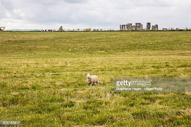 Sheep in front of Stonehenge