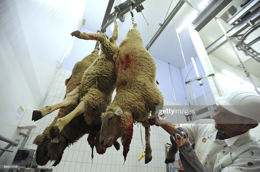 A sheep is slaughtered in a slaughterhouse in Cernay on