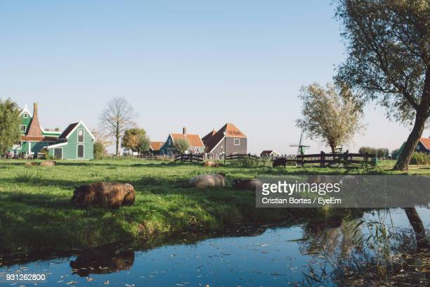 Sheep On Grassy Field By Canal Against Sky
