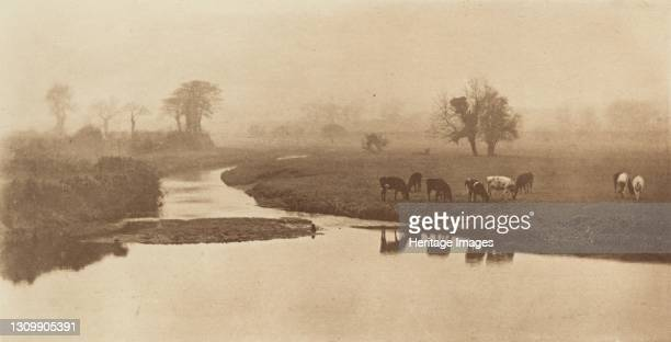 Sheep on the Marshes [Landscape with Cattle], 1890-1891, printed 1893. Artist Dr Peter Henry Emerson. .