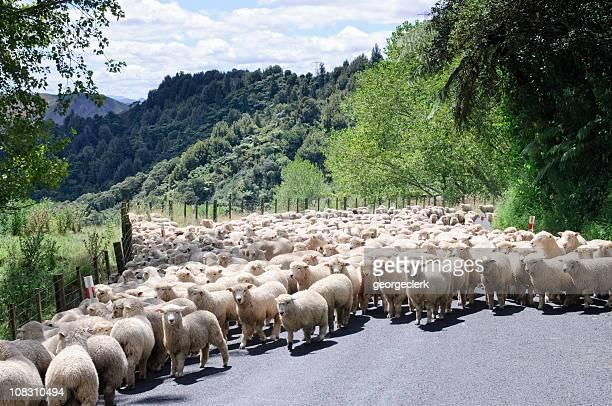 Moutons sur la route