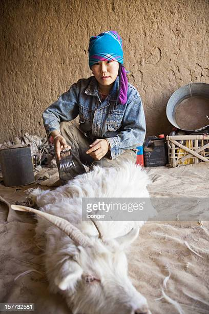 sheep shearing in home