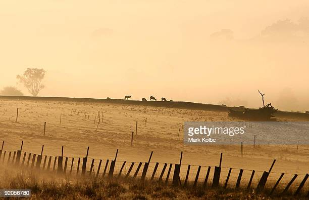 Sheep stand in a paddock as the sun rises before the start of a day of spring shearing at Cherry Hill Pastoral Company property on October 19 2009 in...